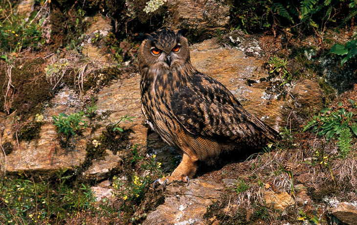 Study concerning birds of prey in Fanes-Sennes-Prags / Fanes-Senes-Braies Nature Park and Puez-Geisler / Puez-Odle Nature Park